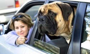Составлен список самых безопасных автомобилей для животных
