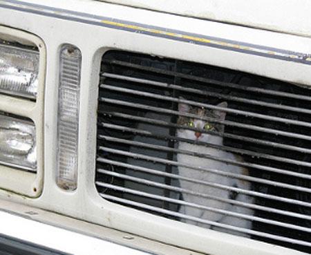 10822 Кот в моторном отсеке